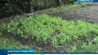 Посев мака во дворе днепропетровчанина | ИА Мост-Днепр | ИА Мост-Днепр - Днепропетровск