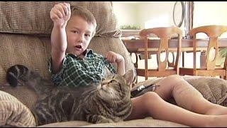 Прикол Кошка защитила мальчика