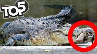 TOP 5 - Útoky zvierat zachytené na kameru