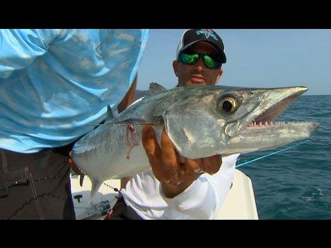 Offshore Kingfish Fishing Videos Off Of Tampa Bay Florida
