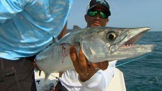 Kingfish Offshore of Tampa Bay Fishing Videos