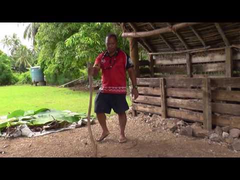 Aitutaki Cultural Tour - preparing Maori umu (1/2)