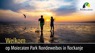 Welkom op Molecaten Park Rondeweibos, Rockanje, Zuid-Holland