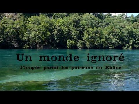 Un Monde Ignoré - Plongée parmi les poissons du Rhône / Diving with Rhône river's fishes