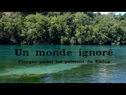 Silure Lac Le Léman Temps Dans Trouble Sème nvPy0m8ONw