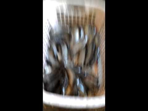 ปลาหมอในบ่อพลาสติกหลังบ้าน
