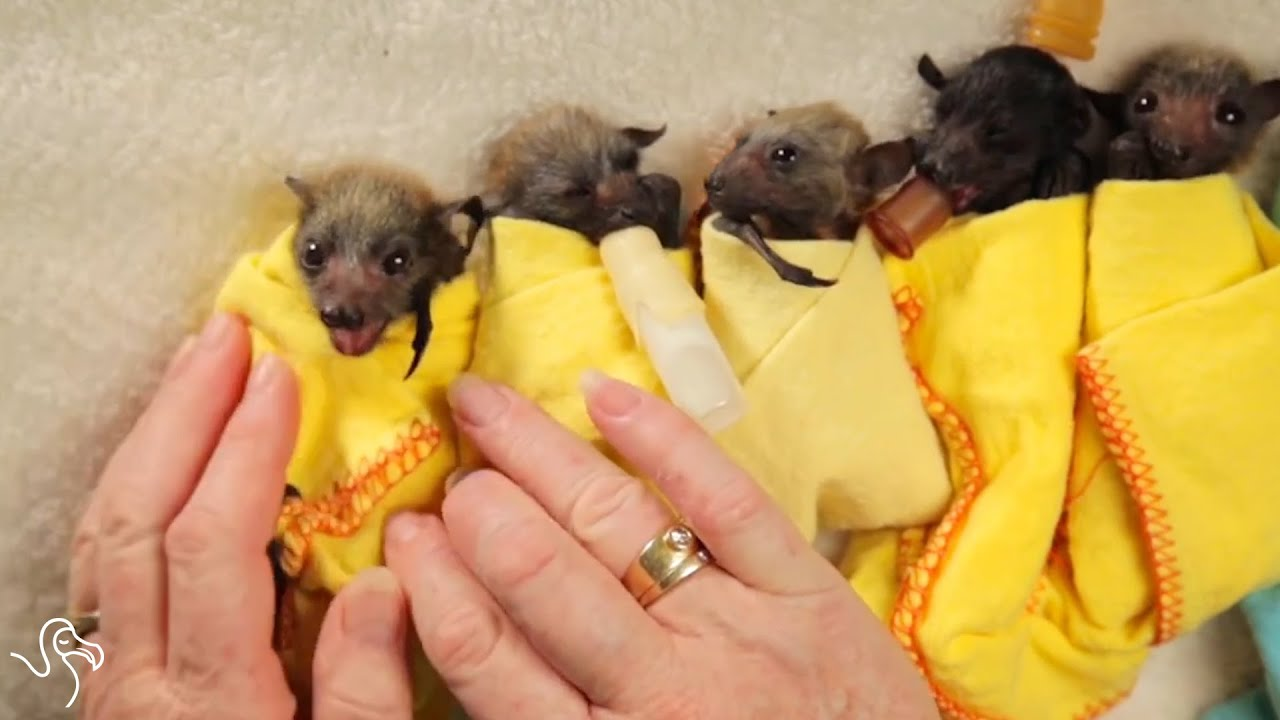 Orphaned Animals Get a Second Chance