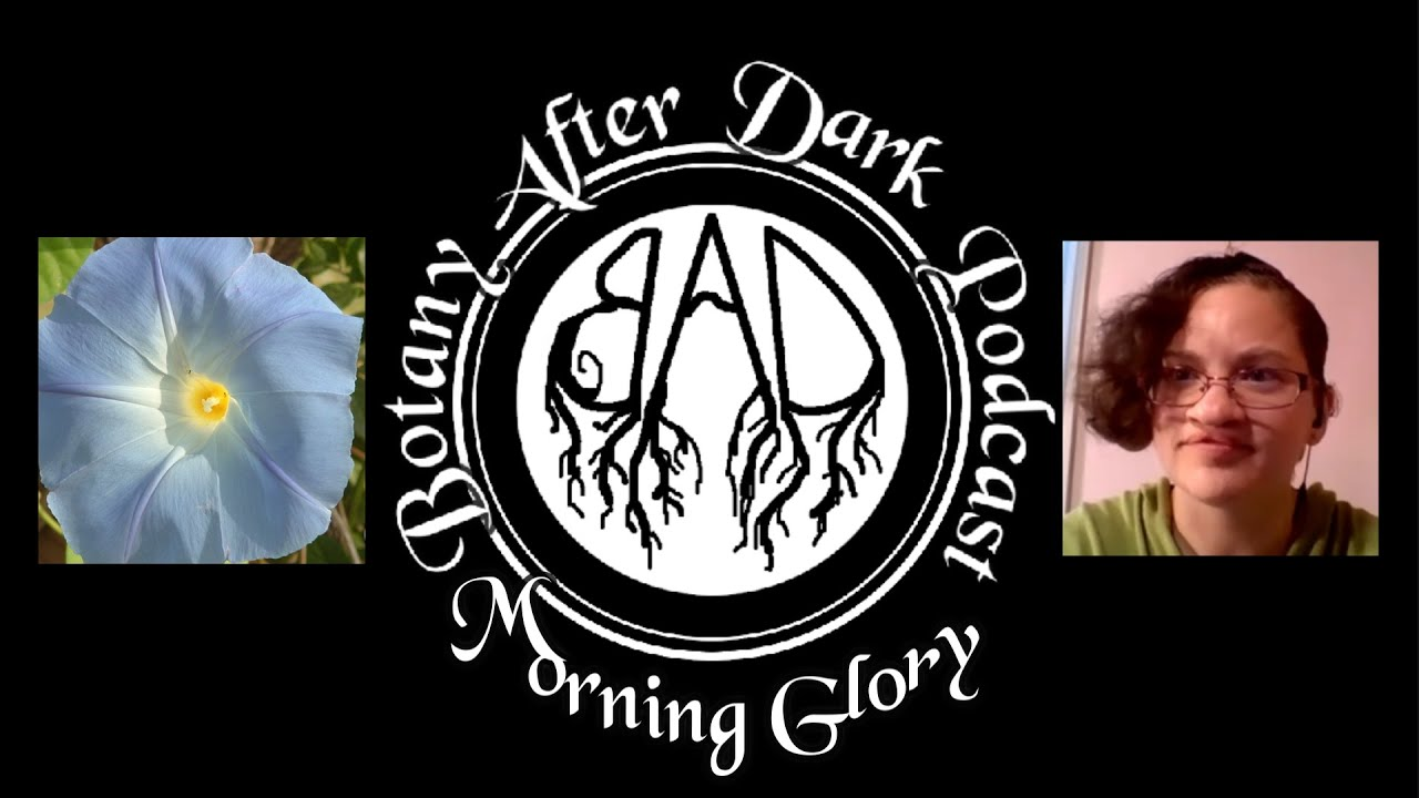 Botany After Dark Podcast, Episode 1: The Morning Glory, +BONUS