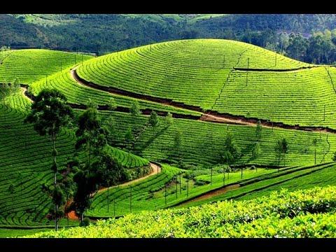 Road trip from kolukkumalai to Munnar town | Kerala | Gods own country | Kerala tourism