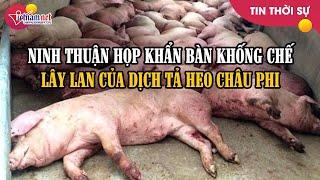 Ninh Thuận họp khẩn tìm phương án hạn chế lây lan dịch tả lợn châu Phi