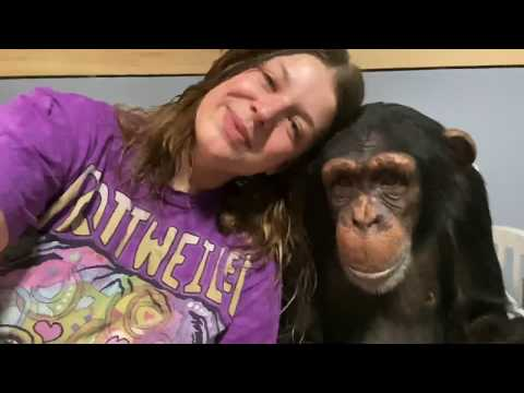 MORNING ROUTINE with SUGRIVA the CHIMPANZEE ❤️