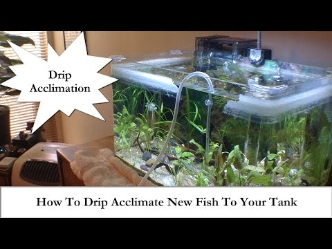 Adding New Fish? How To Drip Acclimate New Fish To Your Tank