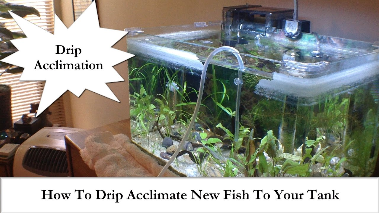Freshwater fish acclimation - Adding New Fish How To Drip Acclimate New Fish To Your Tank