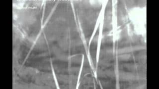 Artificial Memory Trace - Elekreon (Insekt Raga)