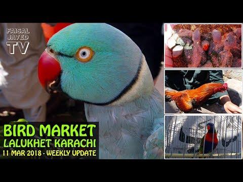 Parrot for Sale   Lalukhet Sunday Birds Market Karachi   Weekly Update   Video in URDU/HINDI