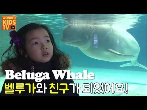 Meet the legendary white whale Beluga! Shark aquarium l beluga whale l aquarium l shark attack
