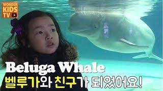 전설의 흰고래 벨루가를 만나다! 고래와 친구가 되었어요 상어 아쿠아리움 l beluga whale l aquarium l shark attack l shark