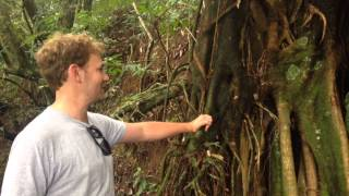 Tropical Rainforest Adaptations