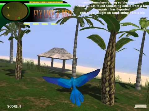 Fly Like a Bird 3- Mccaw - YouTube