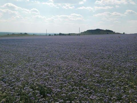 Семена трава для пернатых
