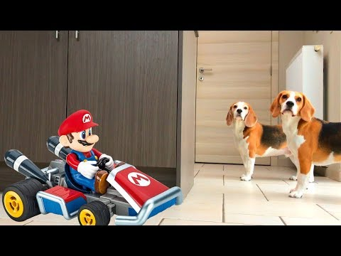 Funny Dog Pranked by Mario in his Super R/C Go kart