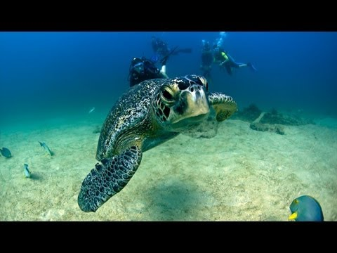 Marine Protected Areas:  A Success Story - Perspectives on Ocean Science