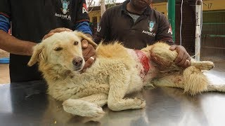 Badly burned but so brave, street dog