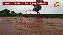 Tractor sweeps away by flood waters near Boriguma in Koraput