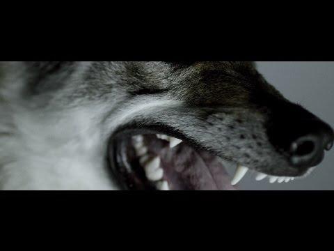 Grafa - Instinkt (official video)