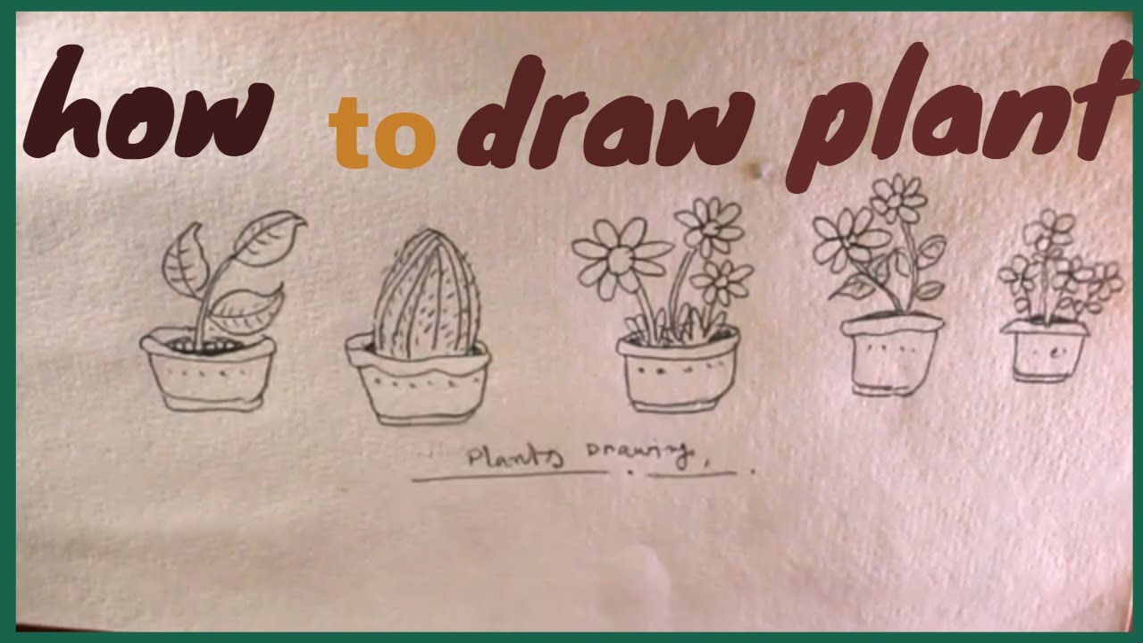 How To Draw Plant Step By Step Different Type Of Plant Drawing Draw Plant Youtube