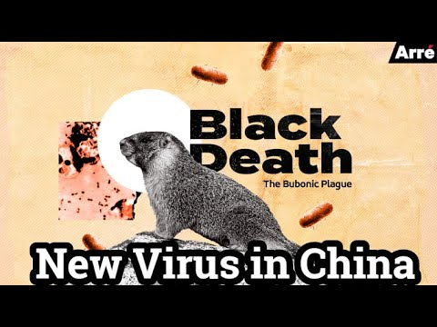 New Virus In China ( Bubonic Plague OutBreak 2020 ) The ...