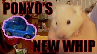 Hamster Caught Riding Dirty!