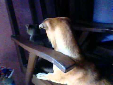 Anjing vs kucing.3gp Travel Video