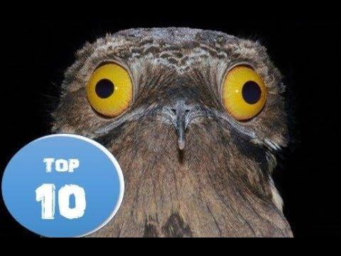 Top 10 Weirdest Animals