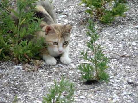 「cat hunting」の画像検索結果