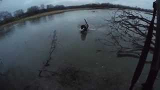 "Best Retrievers Duck Hunt With Andy Woodard And ""rocky"""