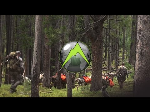 Using Pack Goats For Hunting Elk