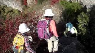 田原山(鋸山) 2010年11月21日