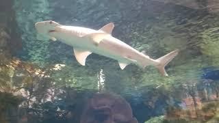 Shark Reef Aquarium Las Vegas