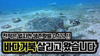 울산해변에서 바다거북을 살리고 왔습니다! 멸종위기 바다…