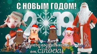 С Новым годом 2019 красивые поздравления и пожелания в новый 2019 год от свинки