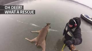Weather Gone Viral- Deer Rescue