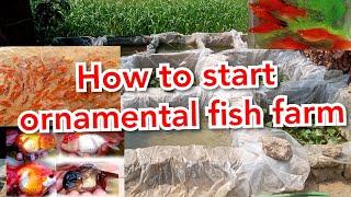 How to Start Ornaṁental Fish Farm