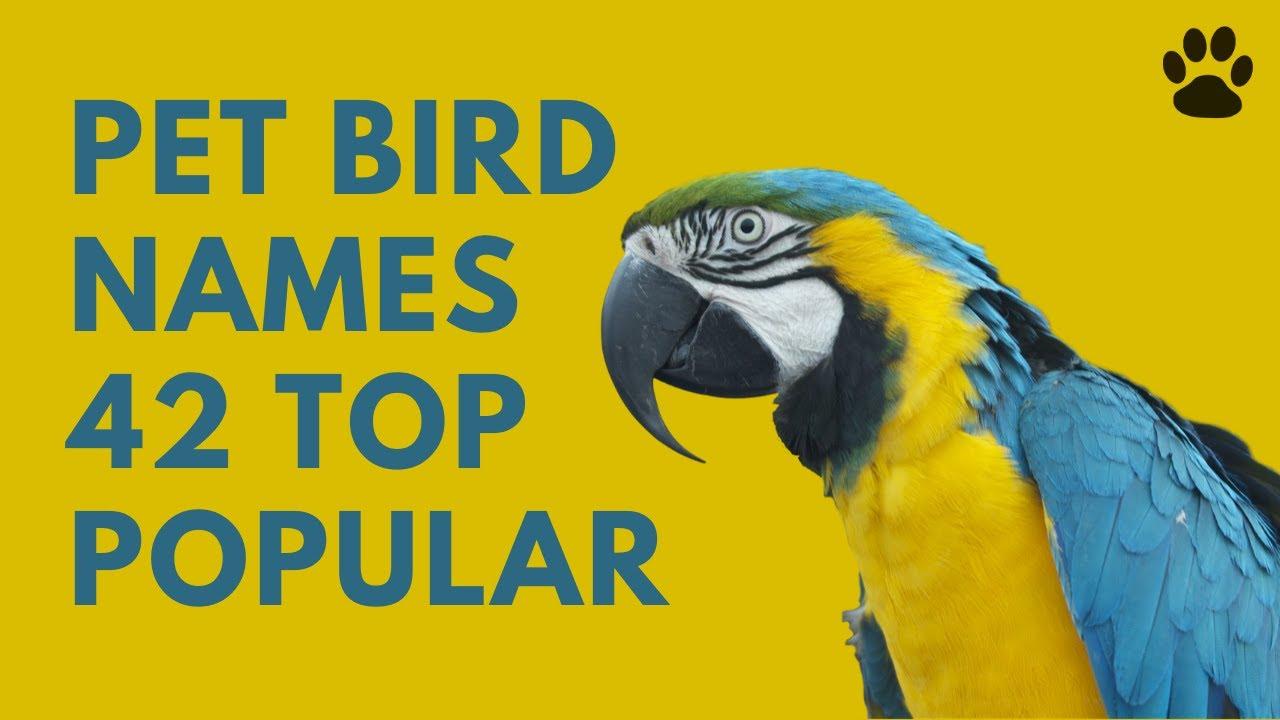 Pet Bird Names 42 Top Popular Best Names Youtube