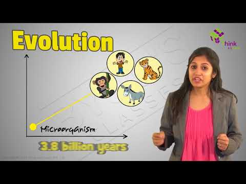 what is the synthetic theory of evolution