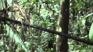 В джунглях Бразилии обнаружено одно из самых неконтактных племен