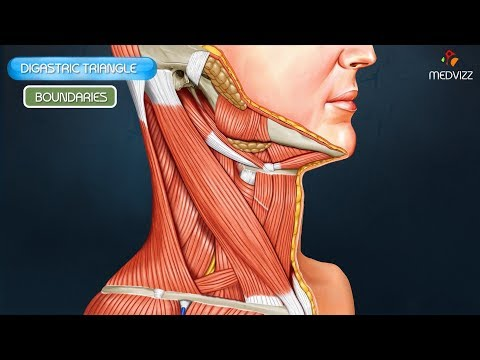 Digastric triangle :