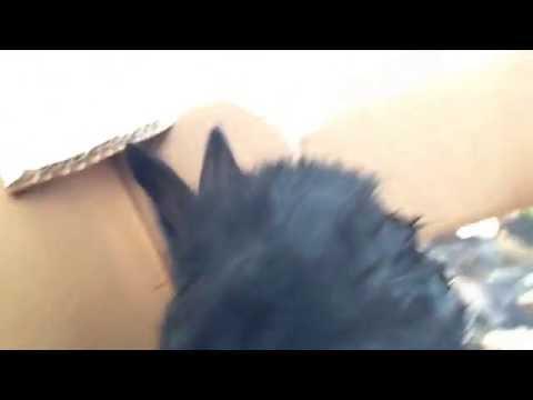 Met het nieuwe konijn spelen