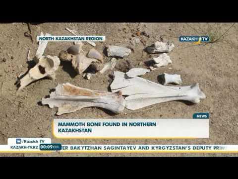 Mammoth bone found in northern Kazakhstan