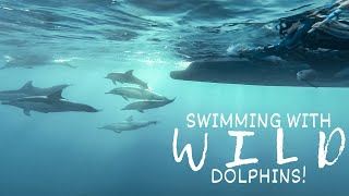 Swimming With Wild Dolphins In Their Natural Habitat - Dolphin Swim Australia